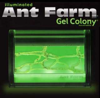 Illuminated Ant Farm Gel Colony Live Habitat Insect Space 3D Kit