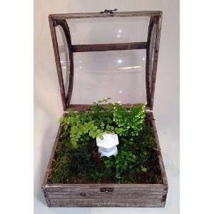 Domed Terrarium (Wardian Case) with Snowkist Club Moss and